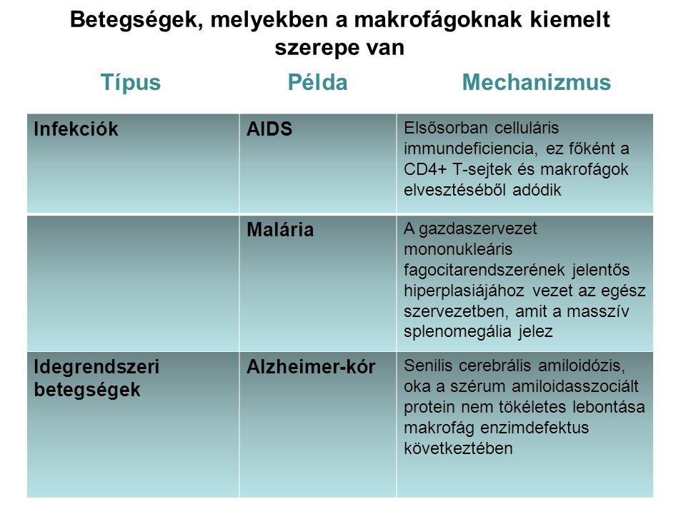 Betegségek, melyekben a makrofágoknak kiemelt szerepe van