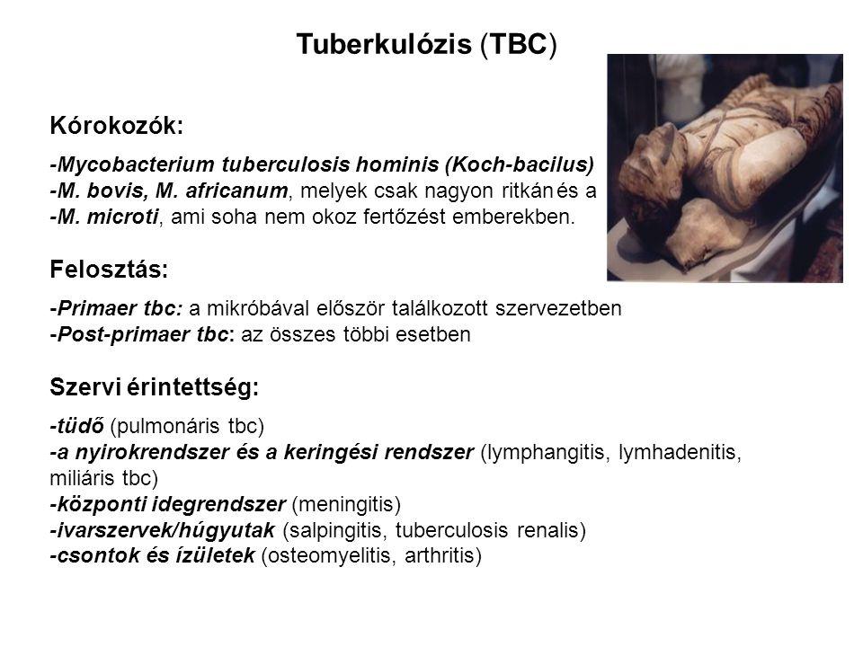 Tuberkulózis (TBC) Kórokozók: Felosztás: Szervi érintettség: