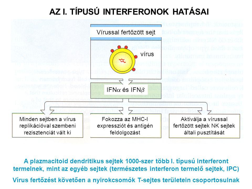 AZ I. TÍPUSÚ INTERFERONOK HATÁSAI
