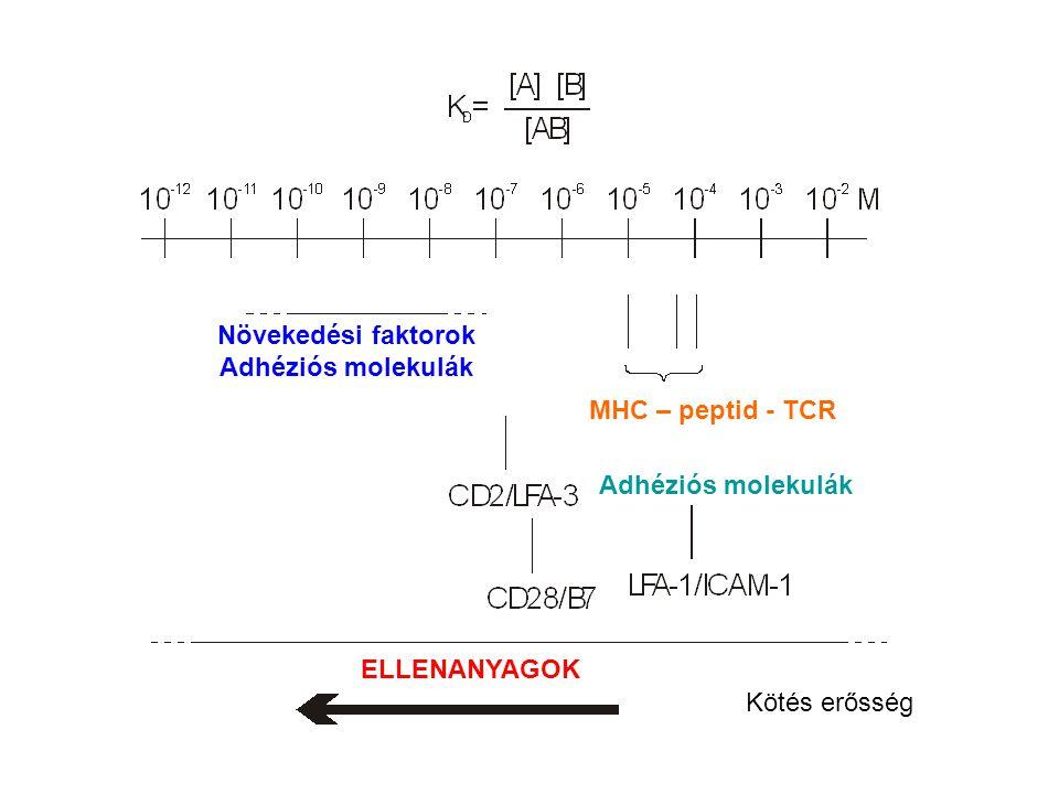 Növekedési faktorok Adhéziós molekulák. MHC – peptid - TCR.