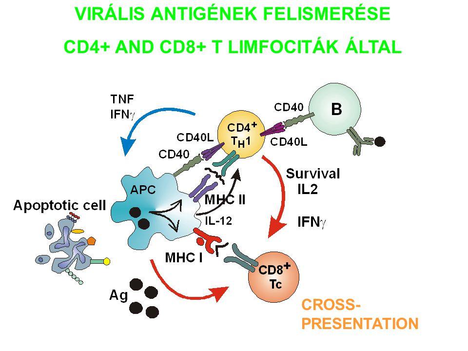 VIRÁLIS ANTIGÉNEK FELISMERÉSE CD4+ AND CD8+ T LIMFOCITÁK ÁLTAL
