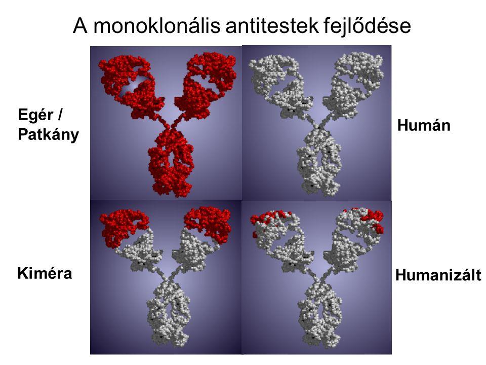 A monoklonális antitestek fejlődése