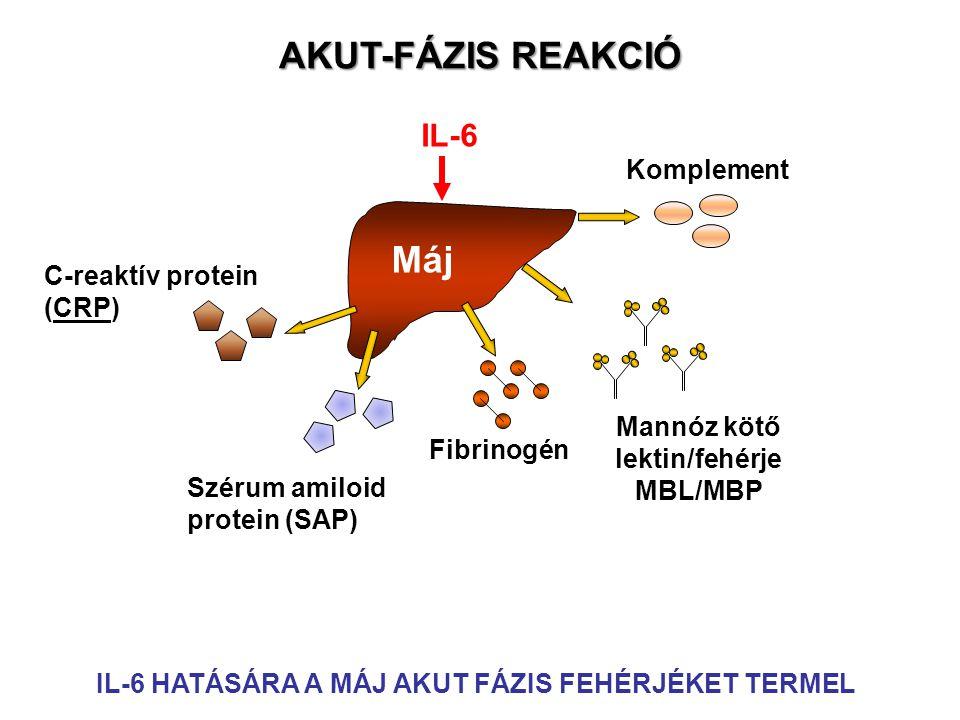 Mannóz kötő lektin/fehérje