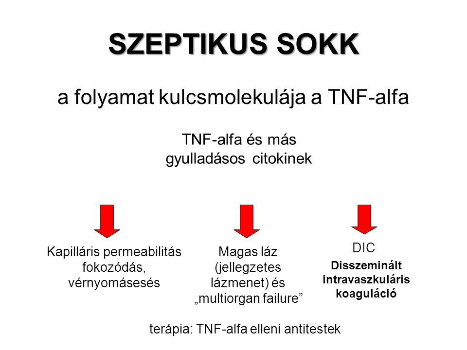 SZEPTIKUS SOKK a folyamat kulcsmolekulája a TNF-alfa