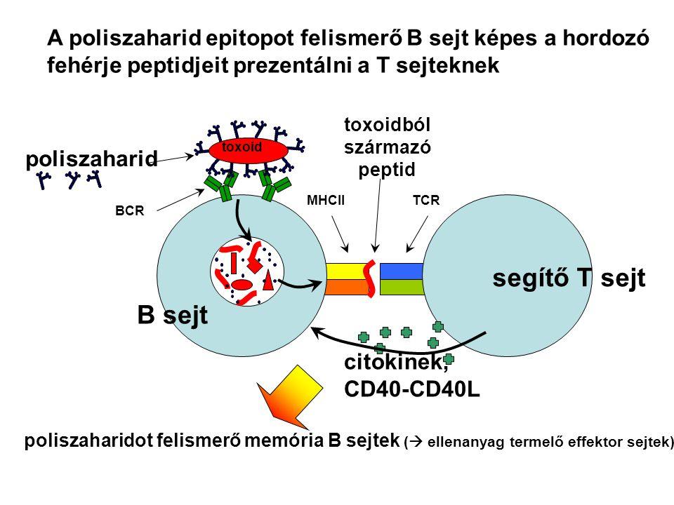 toxoidból származó peptid
