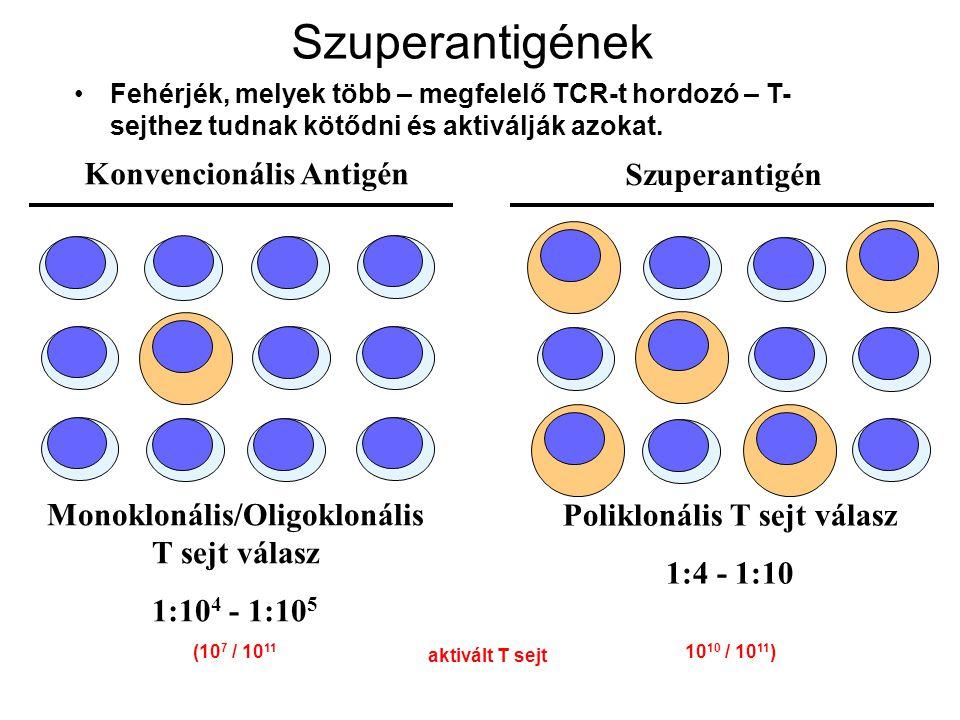 Szuperantigének Konvencionális Antigén Szuperantigén
