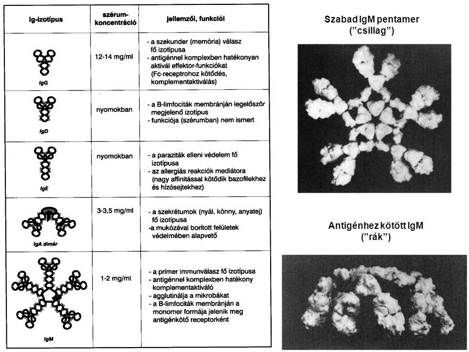 Szabad IgM pentamer ( csillag ) Antigénhez kötött IgM ( rák )