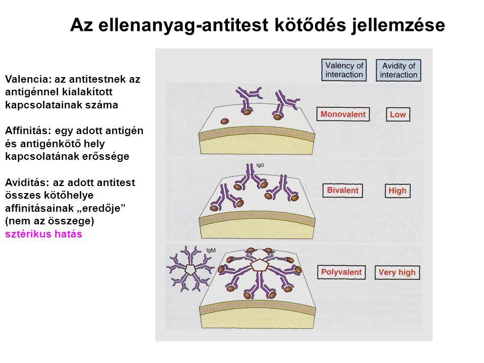 Az ellenanyag-antitest kötődés jellemzése