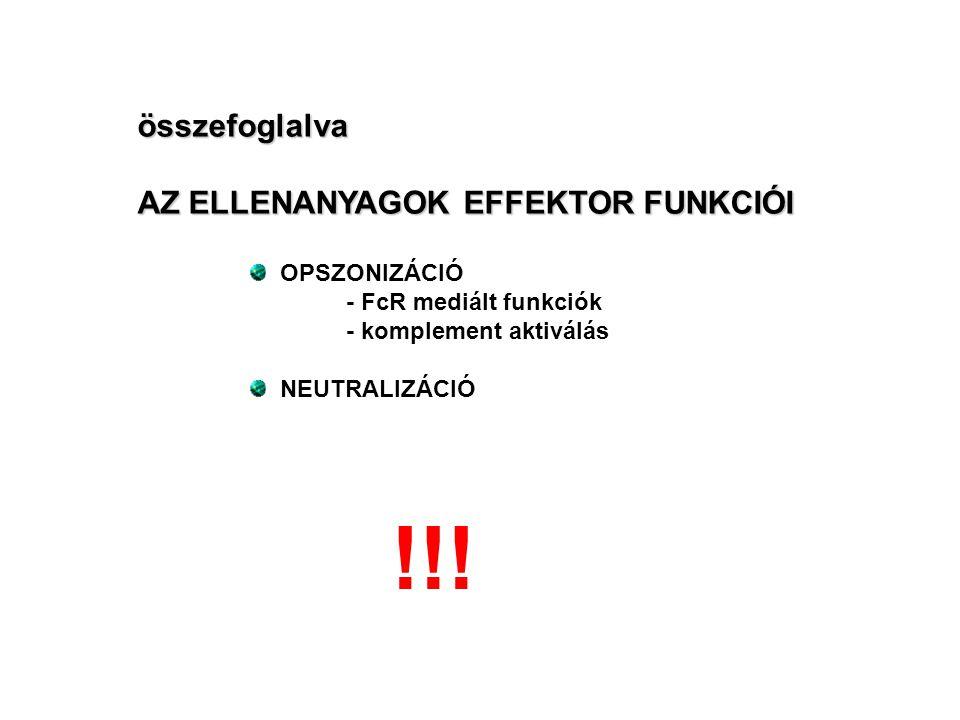 !!! összefoglalva AZ ELLENANYAGOK EFFEKTOR FUNKCIÓI OPSZONIZÁCIÓ