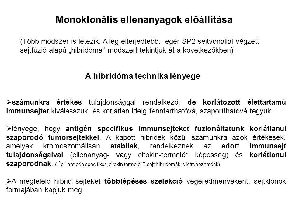 Monoklonális ellenanyagok előállítása A hibridóma technika lényege