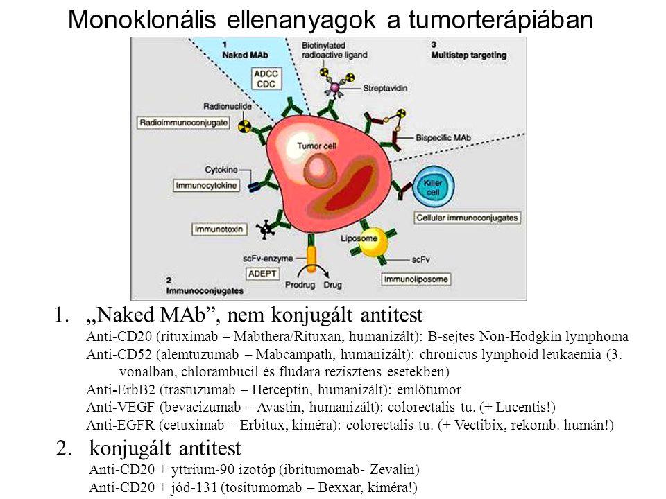 Monoklonális ellenanyagok a tumorterápiában
