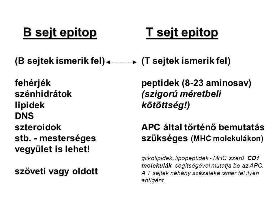 B sejt epitop T sejt epitop (B sejtek ismerik fel) fehérjék