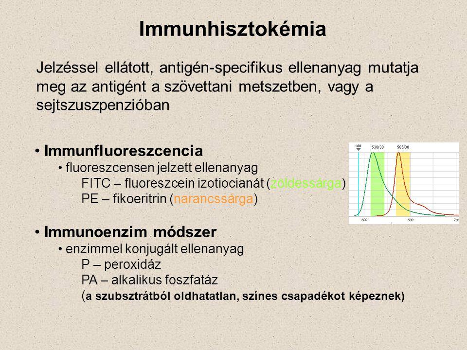 Immunhisztokémia Jelzéssel ellátott, antigén-specifikus ellenanyag mutatja meg az antigént a szövettani metszetben, vagy a sejtszuszpenzióban.