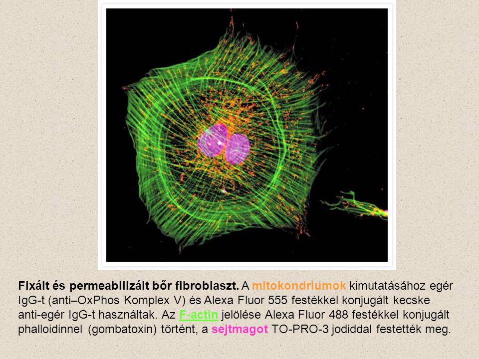 TO-PRO-3 jodid duplaszálú nukleinsav festék