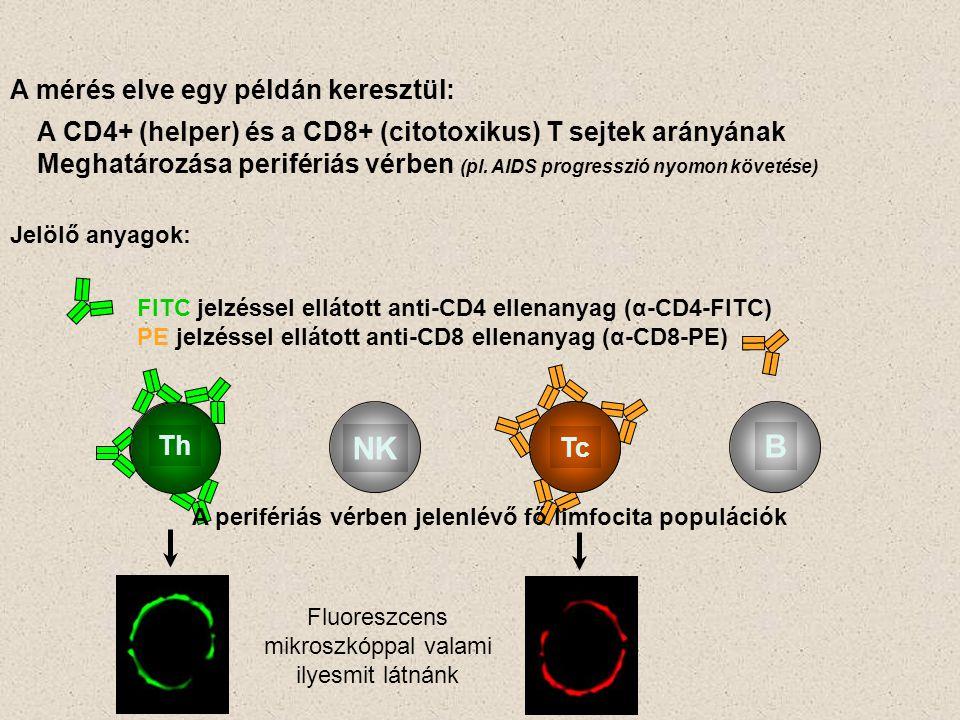 A perifériás vérben jelenlévő fő limfocita populációk