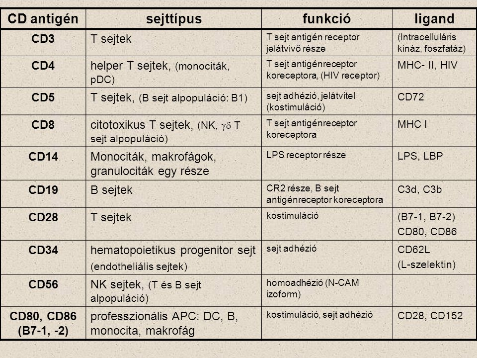 CD antigén sejttípus funkció ligand