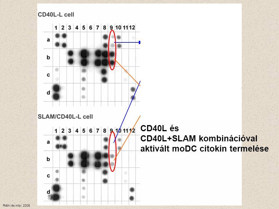 CD40L+SLAM kombinációval aktivált moDC citokin termelése