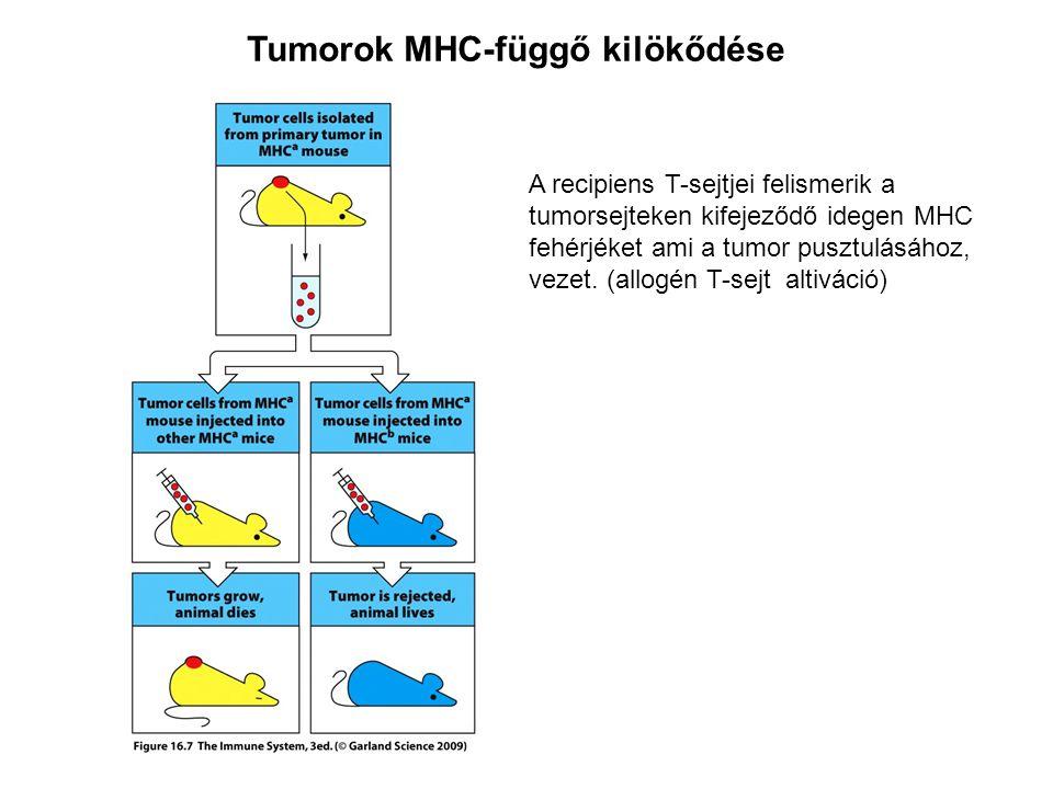 Tumorok MHC-függő kilökődése
