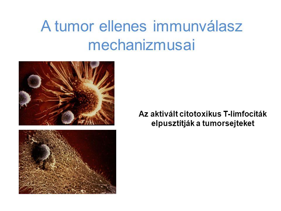 Az aktivált citotoxikus T-limfociták elpusztítják a tumorsejteket
