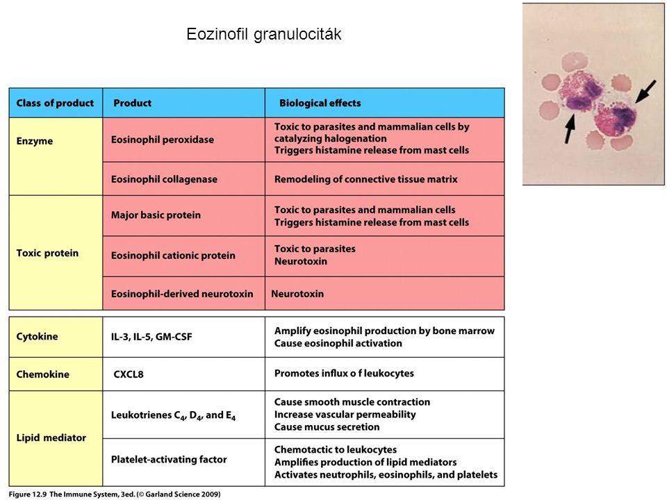 Eozinofil granulociták