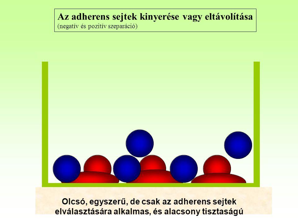 Az adherens sejtek kinyerése vagy eltávolítása