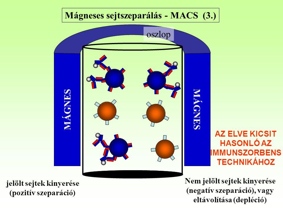 Mágneses sejtszeparálás - MACS (3.)