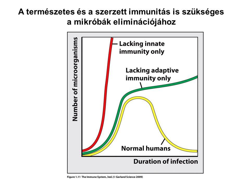 A természetes és a szerzett immunitás is szükséges