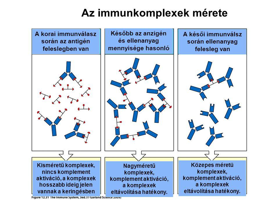 Az immunkomplexek mérete