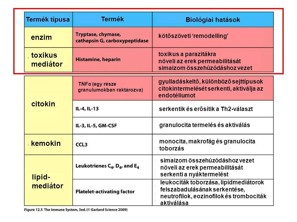 enzim toxikus mediátor citokin kemokin lipid-mediátor Termék típusa
