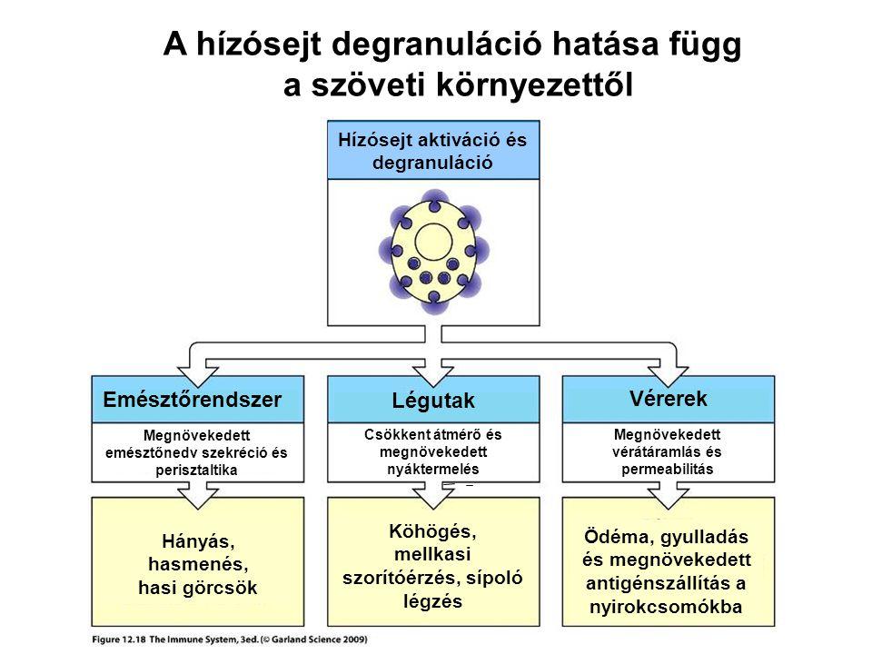 A hízósejt degranuláció hatása függ a szöveti környezettől
