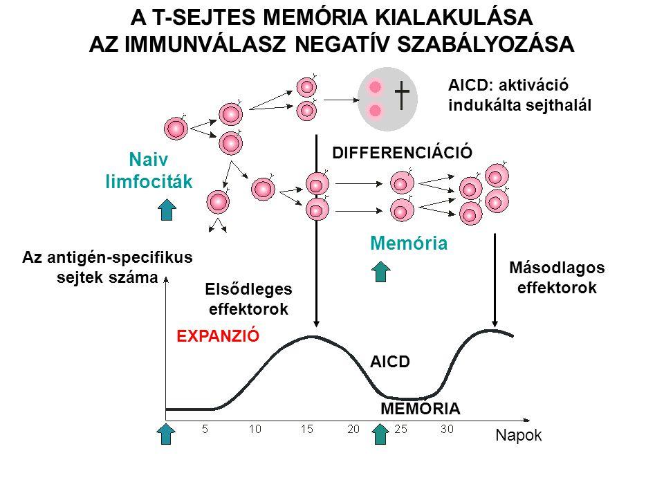 A T-SEJTES MEMÓRIA KIALAKULÁSA AZ IMMUNVÁLASZ NEGATÍV SZABÁLYOZÁSA