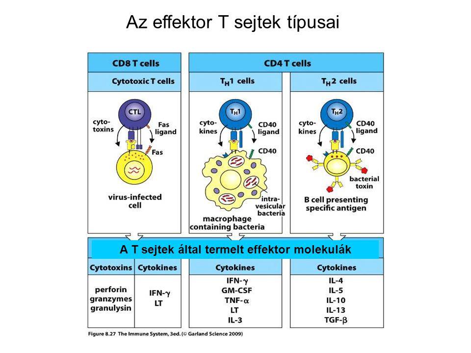 A T sejtek által termelt effektor molekulák