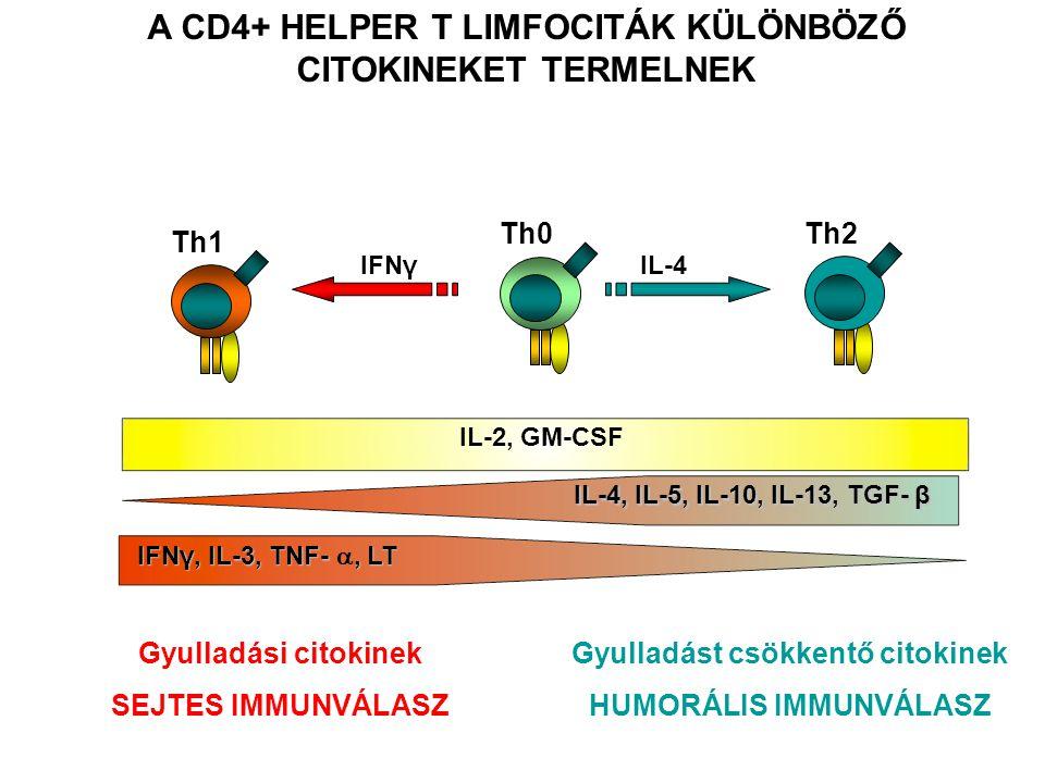 A CD4+ HELPER T LIMFOCITÁK KÜLÖNBÖZŐ CITOKINEKET TERMELNEK