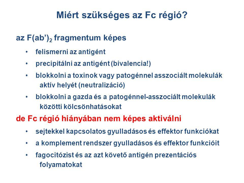 Miért szükséges az Fc régió