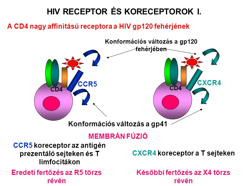 HIV RECEPTOR ÉS KORECEPTOROK I.