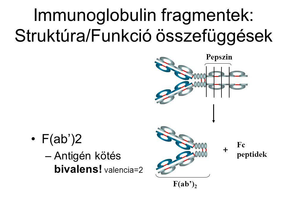 Immunoglobulin fragmentek: Struktúra/Funkció összefüggések