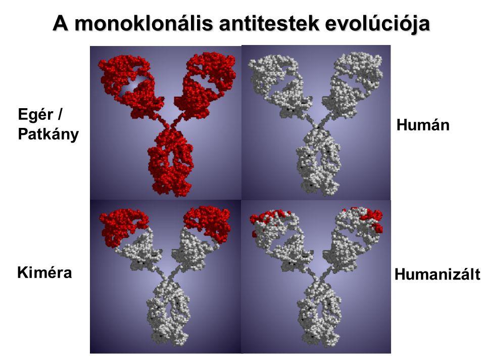A monoklonális antitestek evolúciója