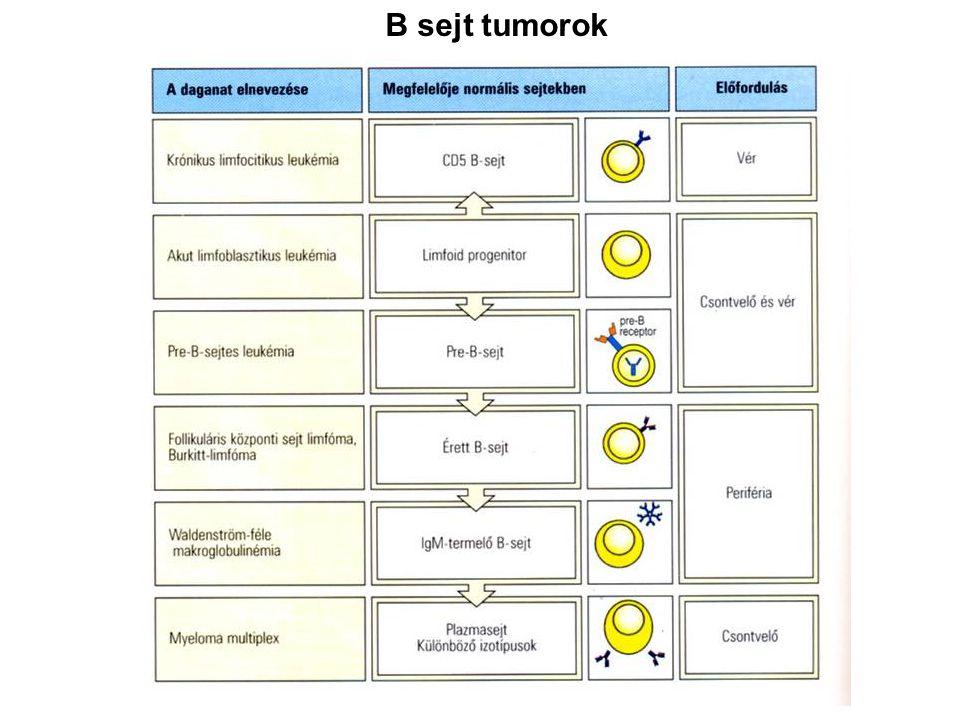 B sejt tumorok Ide jöhetne visszautalólag az idiotípus antigénnel immunizálás pl. B-CLL esetében