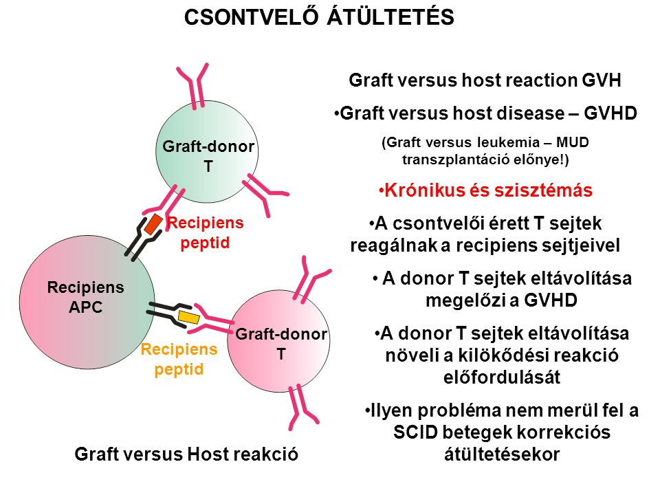 CSONTVELŐ ÁTÜLTETÉS Graft versus host reaction GVH