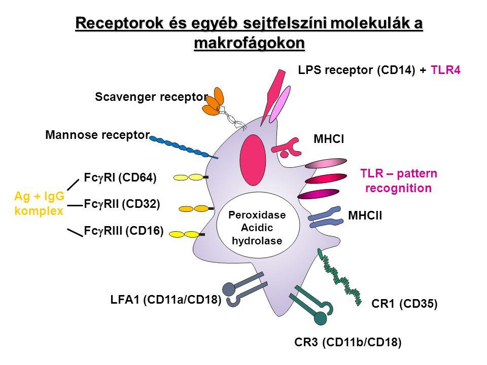 Receptorok és egyéb sejtfelszíni molekulák a makrofágokon
