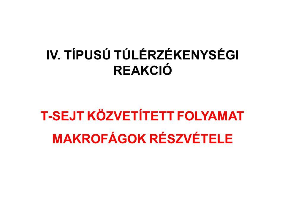 IV. TÍPUSÚ TÚLÉRZÉKENYSÉGI REAKCIÓ