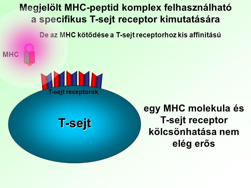 T-sejt Megjelölt MHC-peptid komplex felhasználható