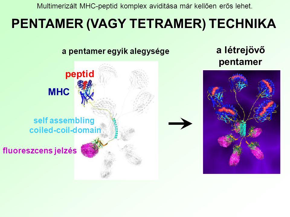 PENTAMER (VAGY TETRAMER) TECHNIKA