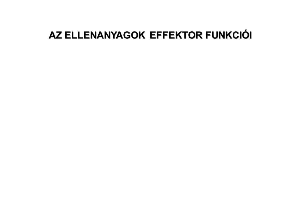 AZ ELLENANYAGOK EFFEKTOR FUNKCIÓI