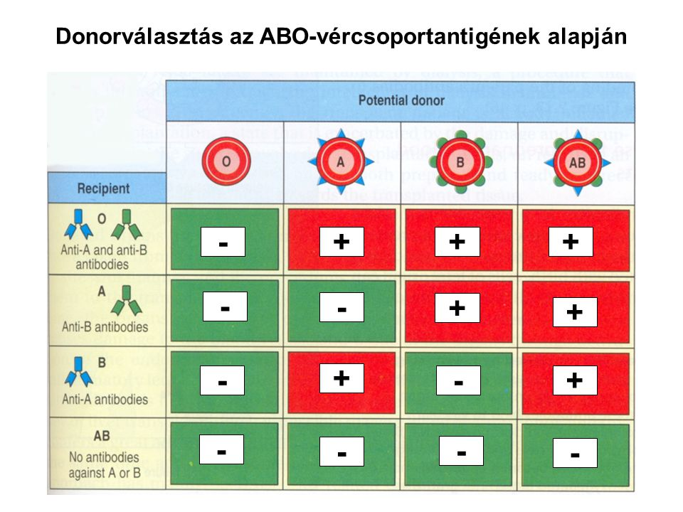 Donorválasztás az ABO-vércsoportantigének alapján