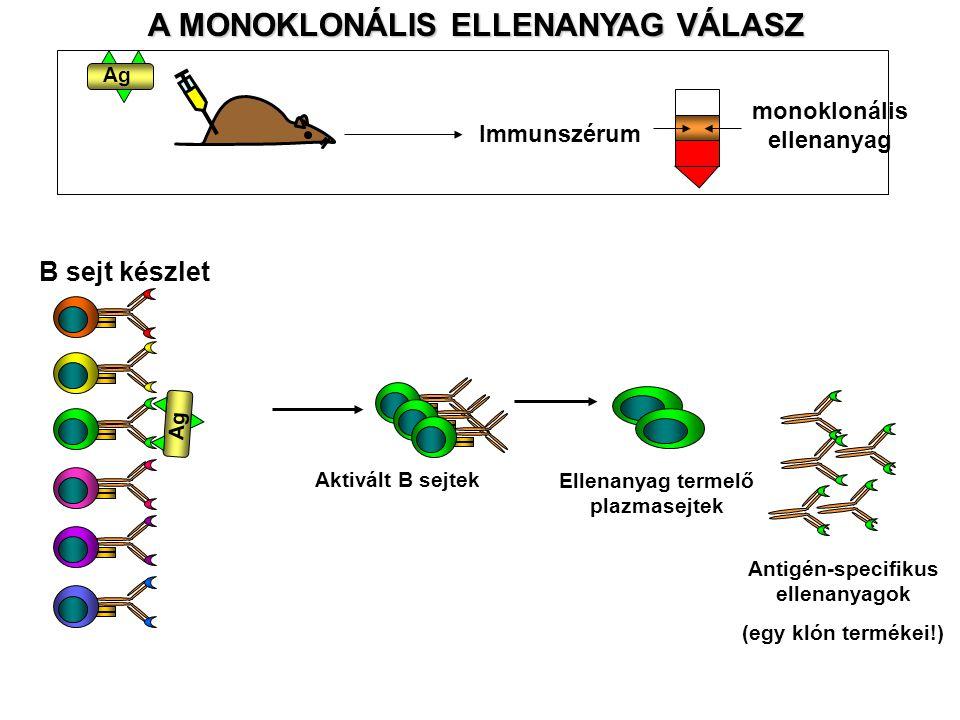 A MONOKLONÁLIS ELLENANYAG VÁLASZ