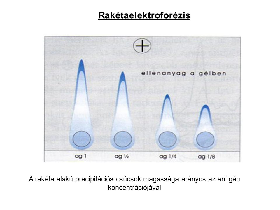 Rakétaelektroforézis