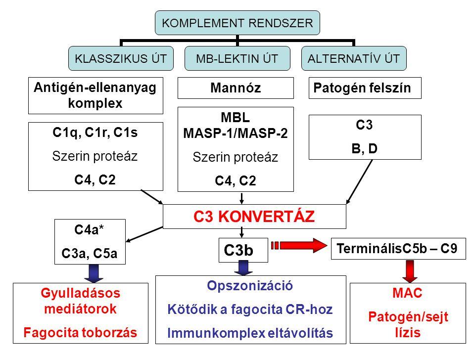 C3 KONVERTÁZ C3b Antigén-ellenanyag komplex Mannóz Patogén felszín MBL