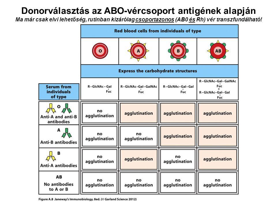 Donorválasztás az ABO-vércsoport antigének alapján