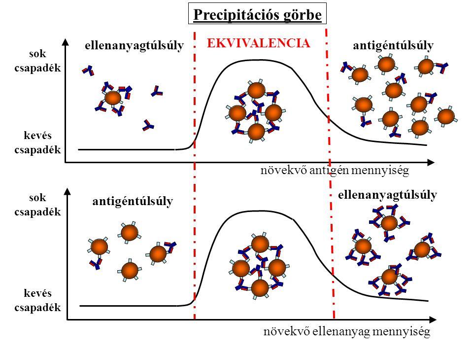 Precipitációs görbe EKVIVALENCIA ellenanyagtúlsúly antigéntúlsúly